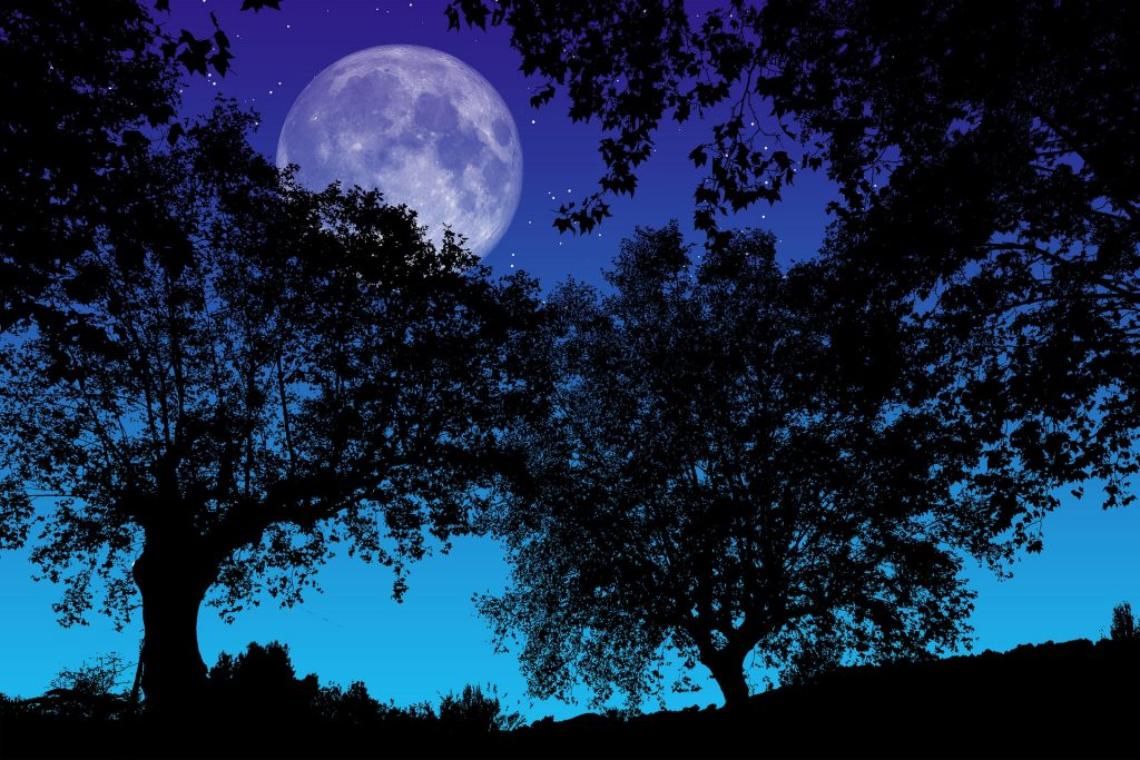 full moon behind oak trees